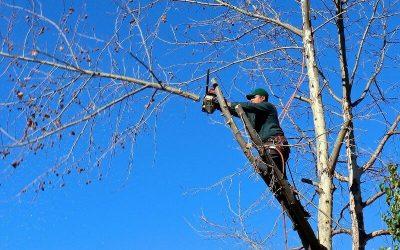 Claves de la limpieza forestal y de montes